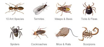Common Pests in Texas